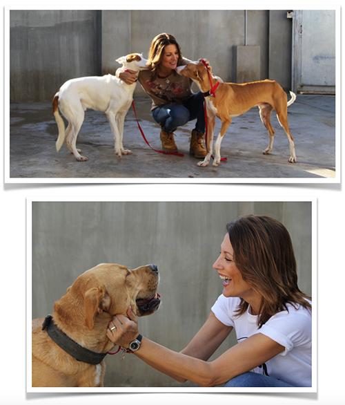 adopta un perro de aupa