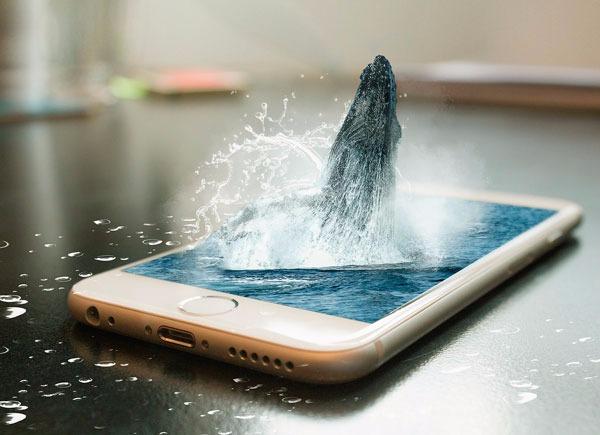 ballena-azul-en-redes-sociales