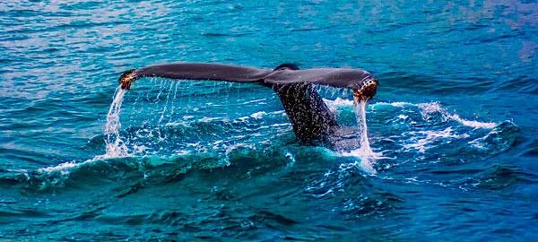 ballena-azul-imagen-destacada